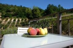 Verde Terrazzo CloseUp Frutta